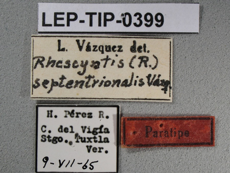 Rhescyntis (Rhescyntis) septentrionalis (etiquetas de macho)