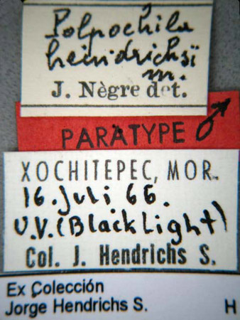 Polpochila hendrichsi (etiquetas)