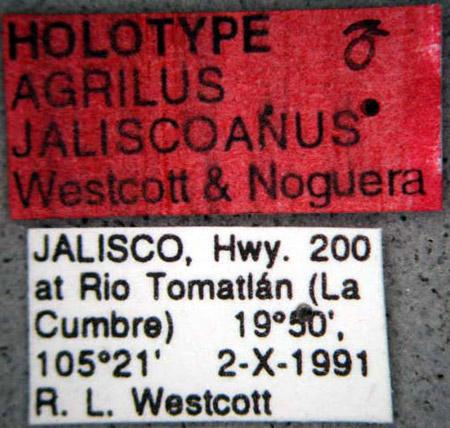 Agrilus jaliscoanus (etiquetas)